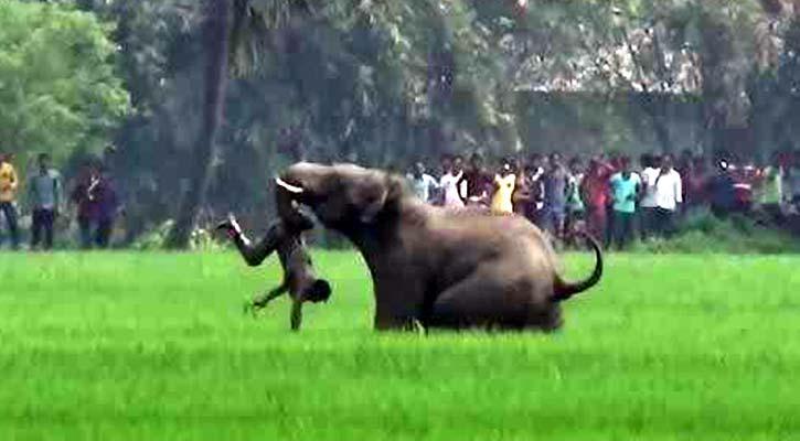 জামালপুরে ভারতীয় বন্যহাতির আক্রমণে যুবকের মৃত্যু