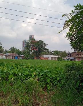 নালা-নর্দমা, ডোবা ও ফেনাযুক্ত পুকুরগুলো মশার 'কারখানা'